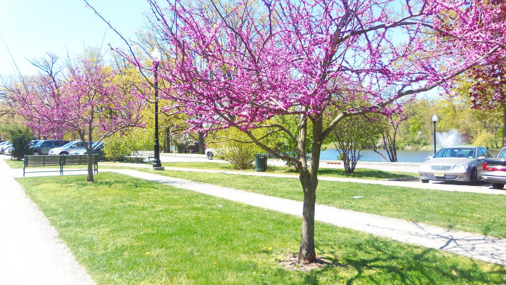 A beautiful Spring day at Verona Park